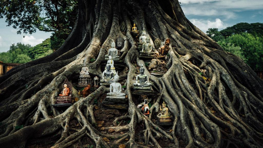 Arbre à Bouddhas