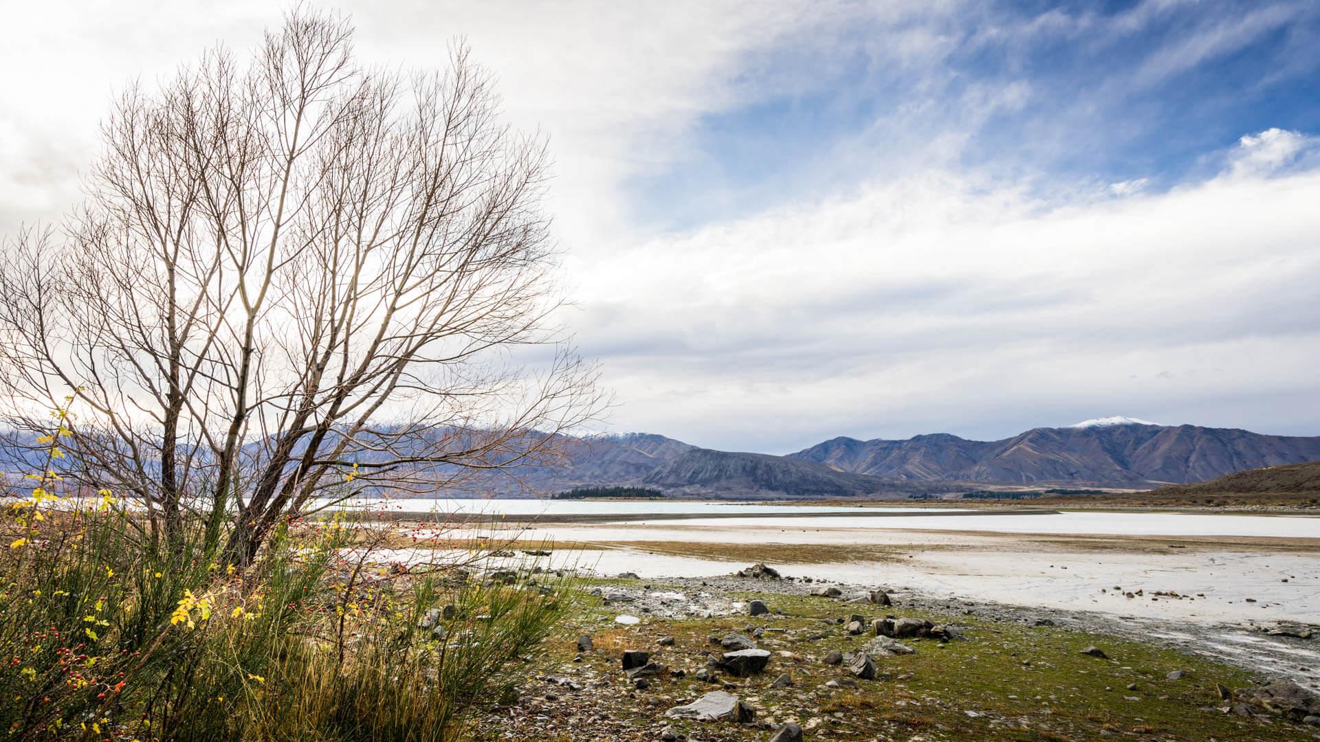 Camping au bord du lac Tekapo