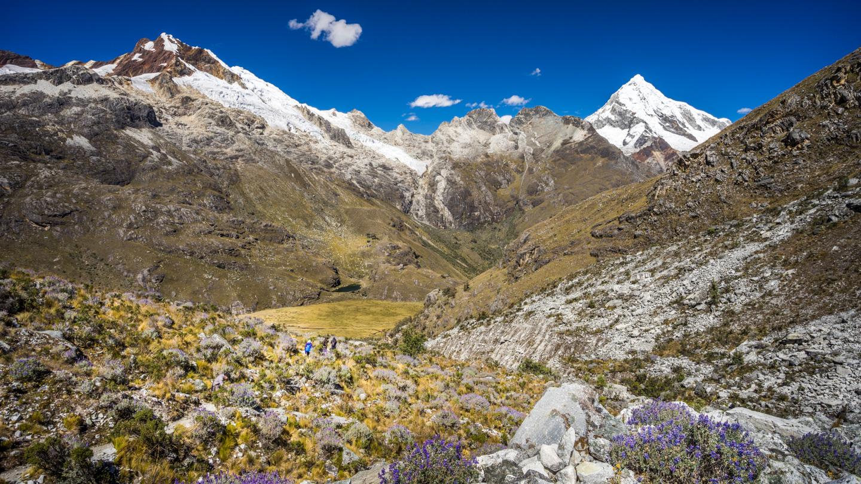 Montagne et fleurs violettes