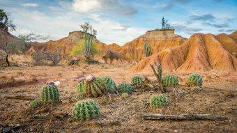 Des cactus au désert de Tatacoa