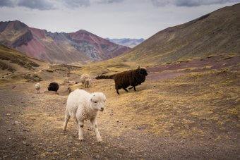 Montagnes Colorées Perou