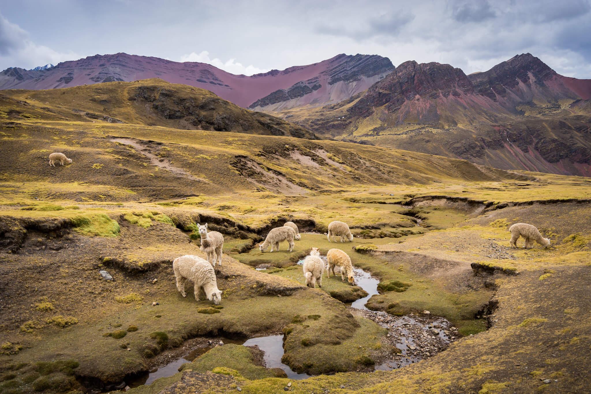 sur le chemin des Montagnes colorées Pérou