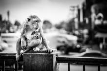 Singe allaitant bébé singe
