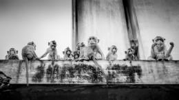 Tribu de singes