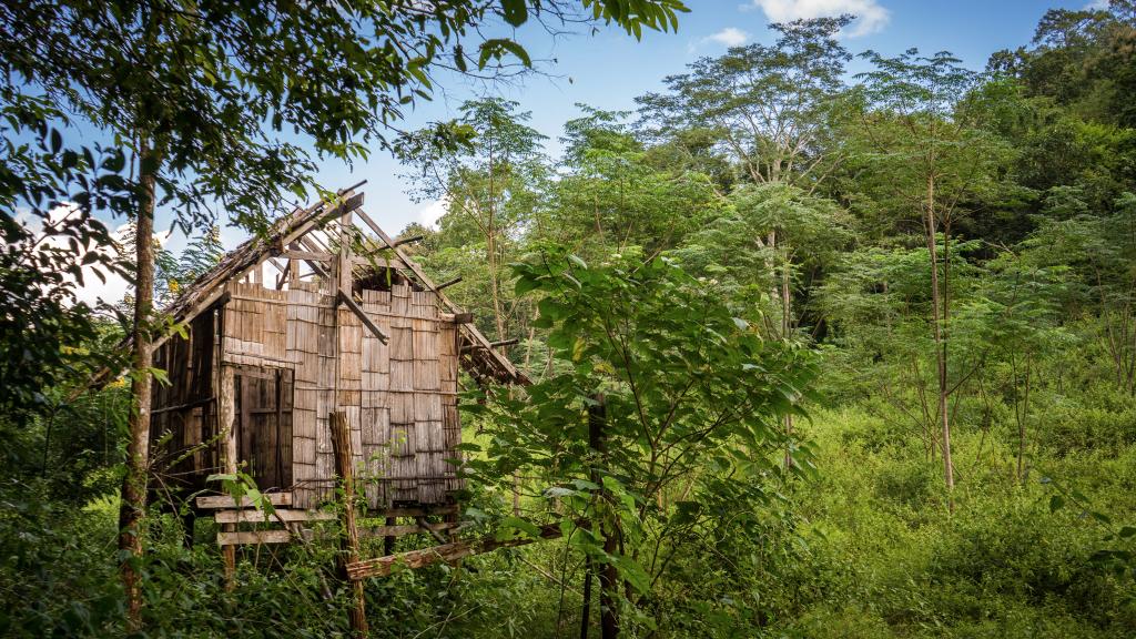 Cabane dans la jungle