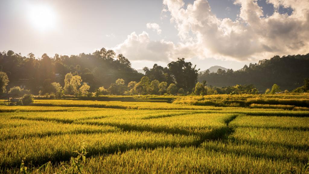 Rizière thailande