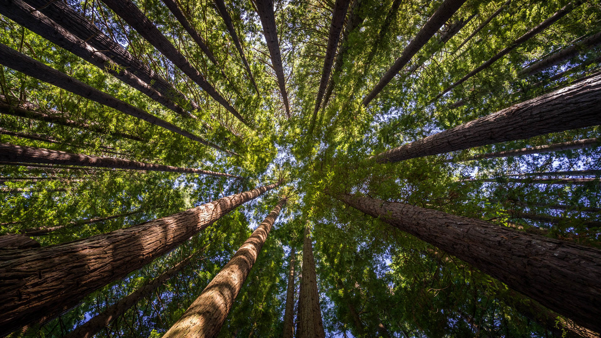 Forêt de Redwoods, Hamurana Springs, Rotorua