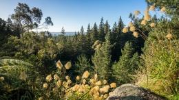 Vue dans la forêt de Redwood, Rotorua