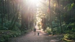 Allée dans la forêt de Redwood, Rotorua