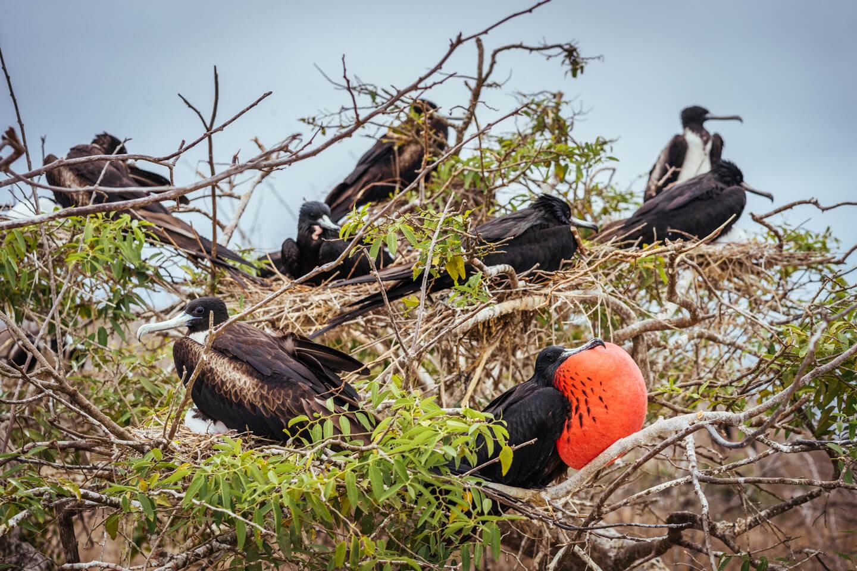 Oiseaux Isla de la Plata