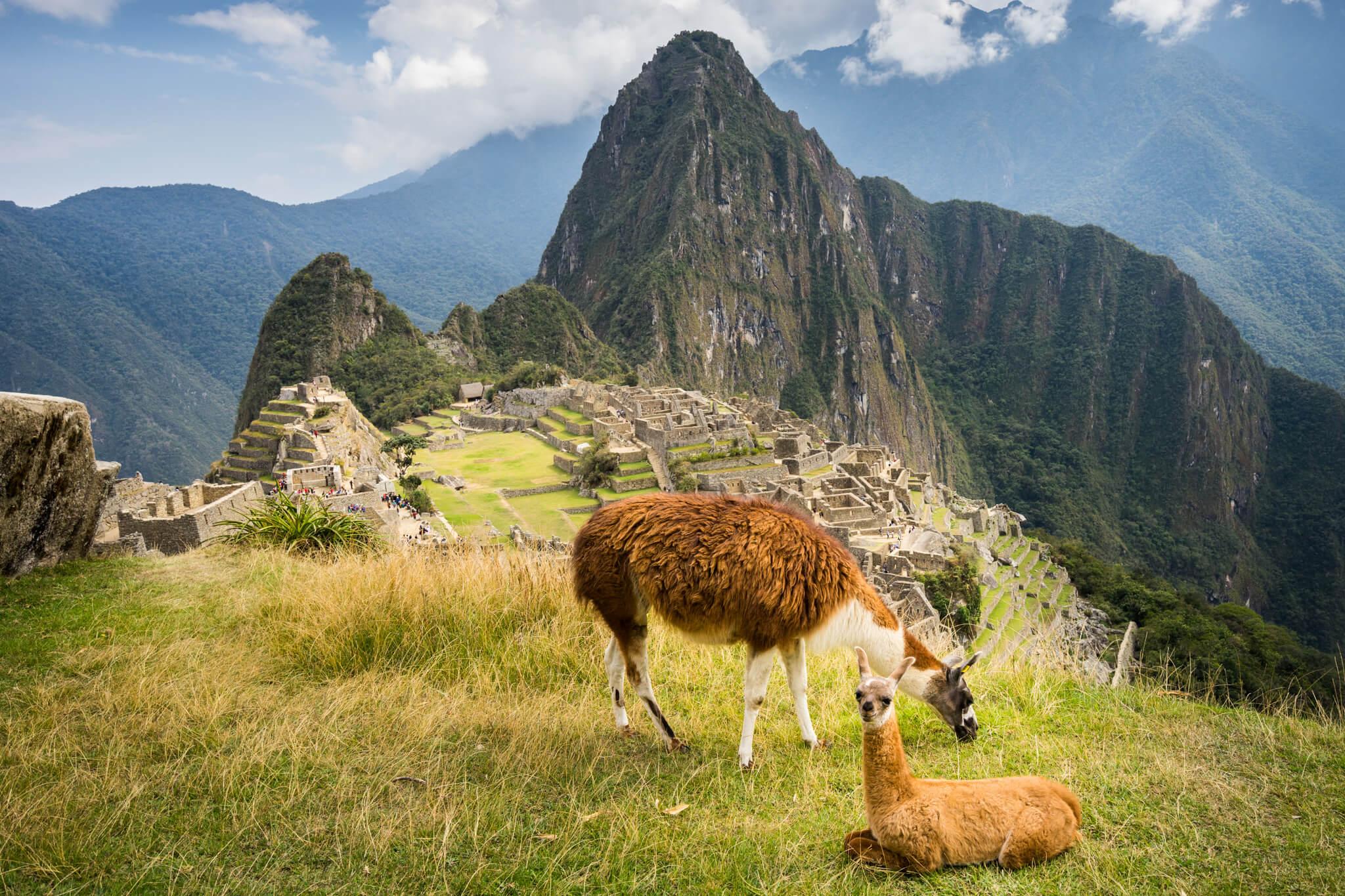 Machu Picchu lamas